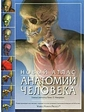 АСТ Маккрекена Т., Уолкера Р.. Новый атлас анатомии человека